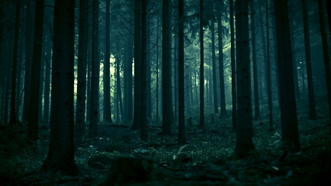 dark-forest-35744-36559-hd-wallpapers